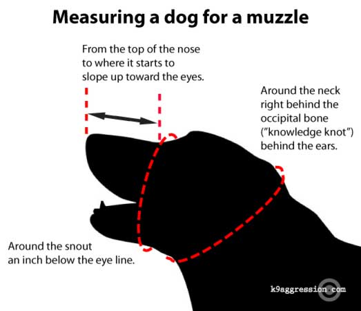 b7aa24d3e4d Controlling dog aggression by using a dog muzzle